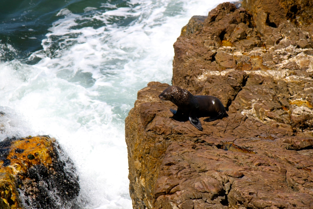 seal in hermanus, namrata singh