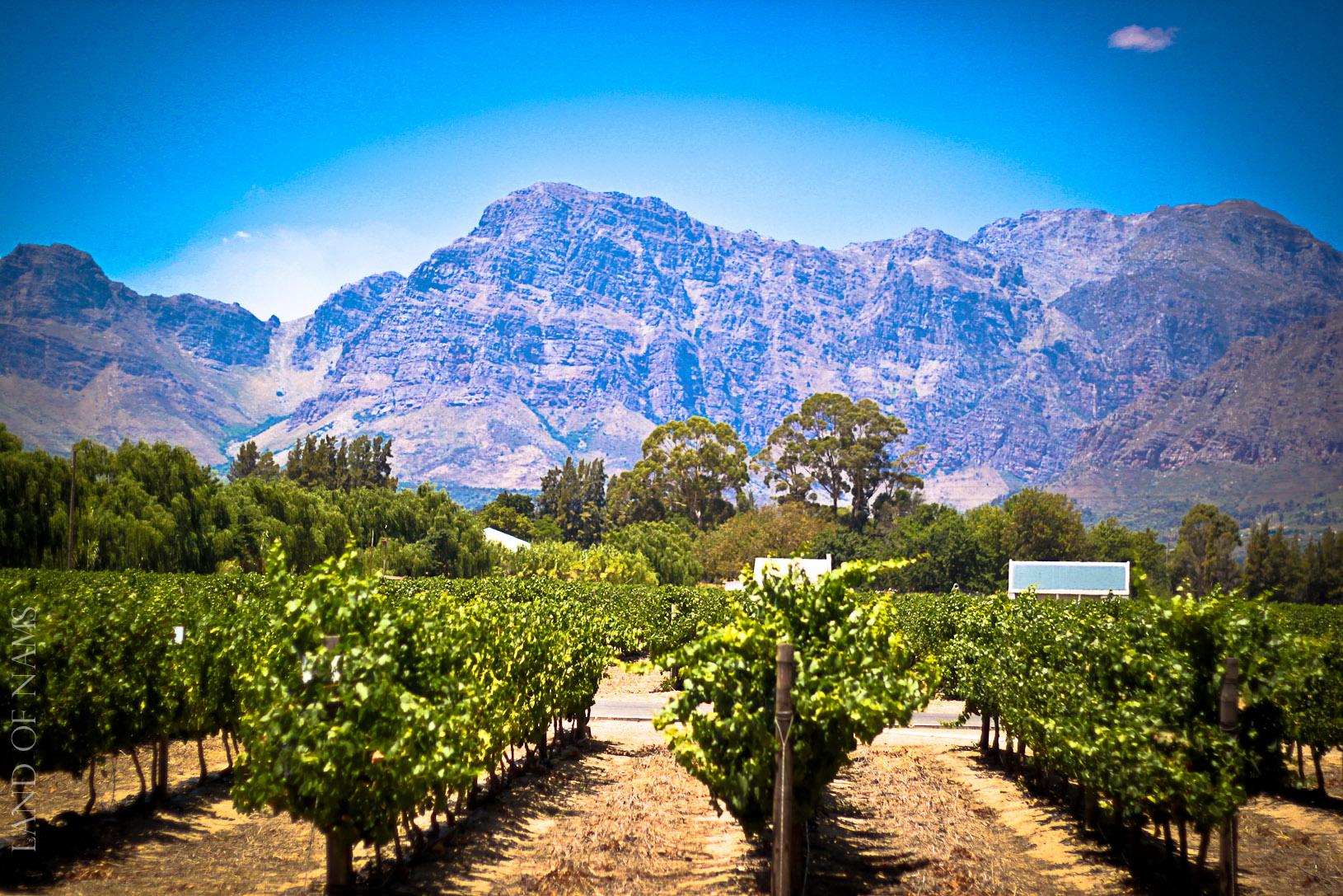 : Nederburg Wine Farm in Paarl, Western Cape | land of nams
