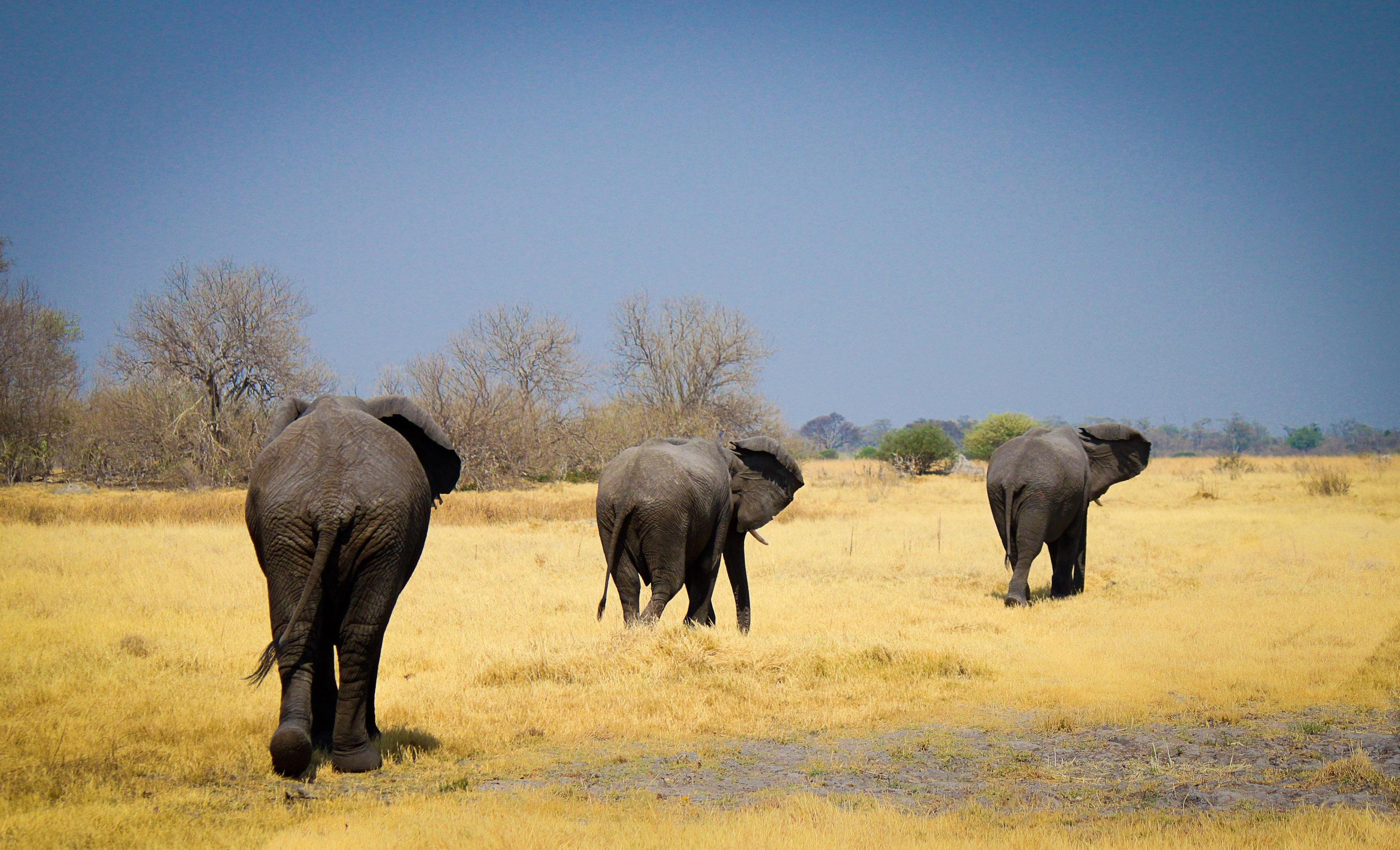 the animals of okavango, moremi and chobe   land of nams